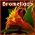 Fan of bromeliads